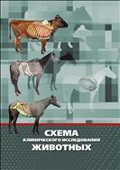 Схема клинического исследования животных